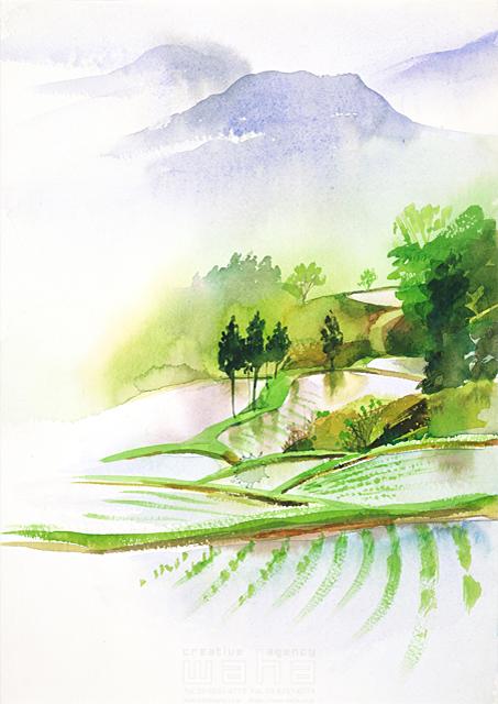 イラスト&写真のストックフォトwaha(ワーハ) 自然、風景、ほのぼの、開放感、農村、農家、棚田、水田、田畑、稲作、田舎、水面、透明感、山、連峰、山麓、ふもと、霧、静か、情緒、風情、日本、長野、水彩 金 斗鉉 12-1183c
