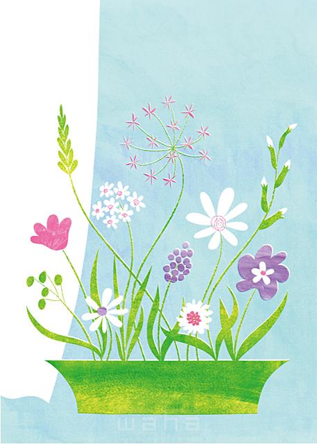 イラスト&写真のストックフォトwaha(ワーハ) インテリア、花、植物、プランター、植木鉢、ガーデニング、部屋、屋内、室内、生活、日常、暮らし、カーテン、ロハス、ダイニング、窓辺、テーブル、エコ、緑、リビング、白い花、フラワーアレンジメント、生け花、マーガレット Ananas Works 19-0681b
