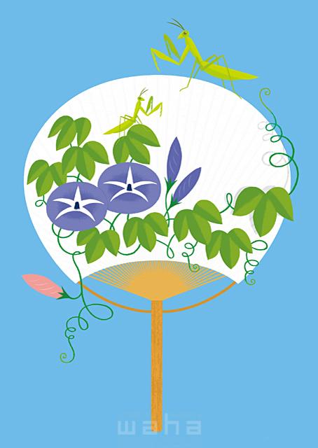 イラスト&写真のストックフォトwaha(ワーハ) イメージ、シンボリック、生活、暮らし、日常、夏、花、朝顔、うちわ、カマキリ、暑い、涼しい、昆虫、浴衣、祭り、エコロジー eka 19-0939b