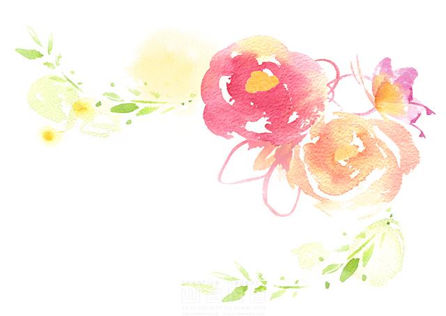 イラスト&写真のストックフォトwaha(ワーハ) 水彩、草、花、植物、イメージ、咲く、春、メッセージ、バラ、エコロジー.フリースペース、白地 たけもと えりこ 19-1883b