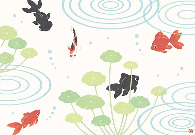 イラスト&写真のストックフォトwaha(ワーハ) 金魚、生き物、魚、池、春、和風、植物、自然、憩い、安らぎ、水 高村 かい 19-2623b