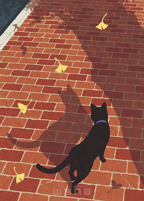 イラスト&写真のストックフォトwaha(ワーハ) 動物、生き物、猫、道、街、歩く、季節、秋、落ち葉、イチョウ、葉、植物、木、寂しい、儚い、夕方、影 高村 かい 19-2625b