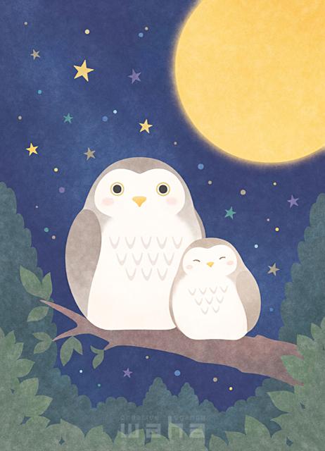 イラスト&写真のストックフォトwaha(ワーハ) 動物、生き物、ふくろう、ミミズク、鳥、親子、森、林、木、自然、葉、植物、夜、月、星、愛情 高村 かい 19-2626b
