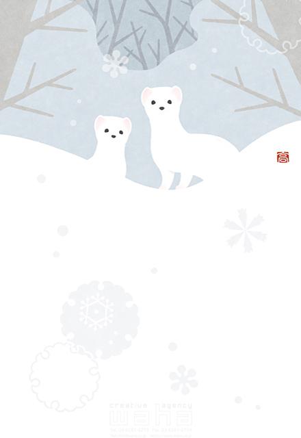 イラスト&写真のストックフォトwaha(ワーハ) 動物、生き物、オコジョ、季節、冬、雪、自然、森、林、田舎、山、寒い、可愛い、愛、癒やし 高村 かい 19-2628b